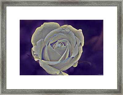 The Ethereal Rose  Framed Print by Renee Anderson