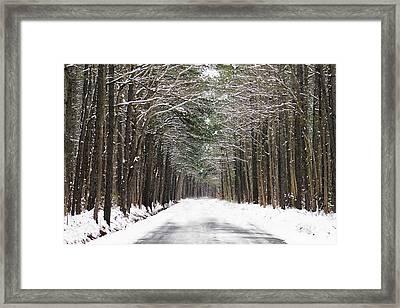 The Evergreen Way Framed Print