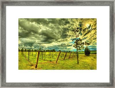 The Exotic Vineyard Framed Print