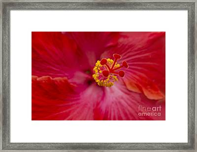 The Expression Of Love Framed Print by Sharon Mau