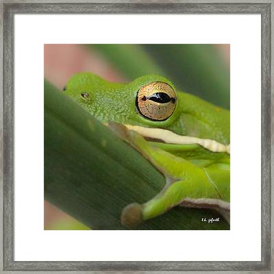 The Eye Has It Squared Framed Print by TK Goforth