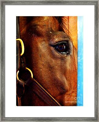 The Eye Of A Champion Da Hoss Framed Print