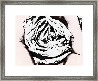 The Eye Of A Rose Framed Print by Thommy McCorkle