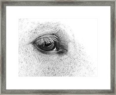 The Eye Of The Horse Black And White Framed Print by Jennie Marie Schell