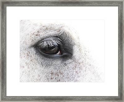 The Eye Of The Horse  Framed Print by Jennie Marie Schell
