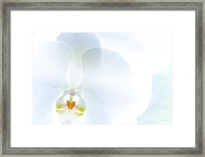 The Eye Of The Tiger Framed Print by Michelle Wiarda