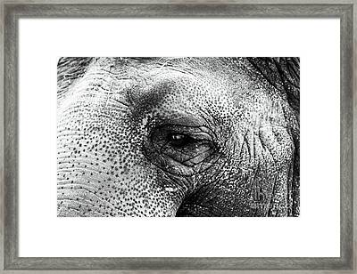 The Eye That Never Forgets Framed Print by John Rizzuto