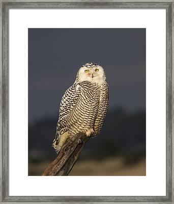 The Eyes Are It Framed Print