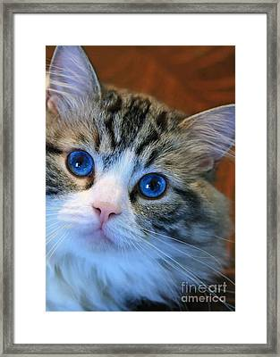 The Eyes Have It Framed Print