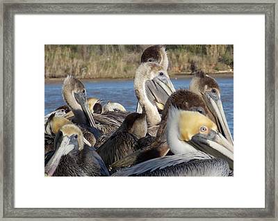 Framed Print featuring the photograph The Eyes Have It by John Glass