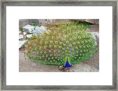 Framed Print featuring the photograph The Eyes Have It by Jonah  Anderson