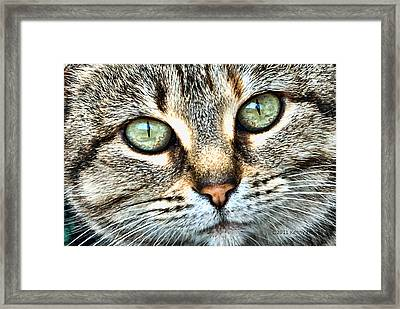 Framed Print featuring the photograph The Eyes Have It by Kenny Francis