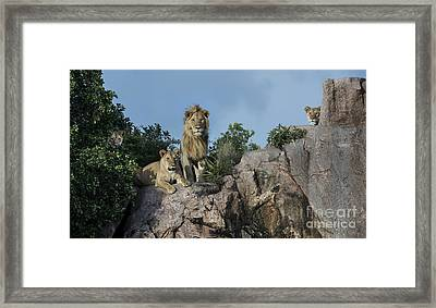 The Eyes Have It Framed Print by Sandra Bronstein