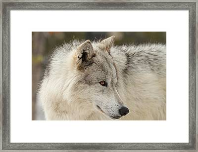 The Eyes Have It Framed Print by Sandy Sisti