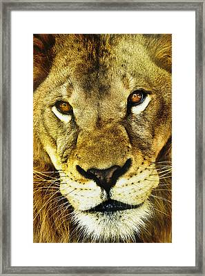 The Eyes Have It Framed Print by Steve Smith