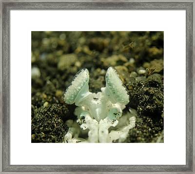 The Eyes Of A White Mantis Shrimp Framed Print by Brent Barnes