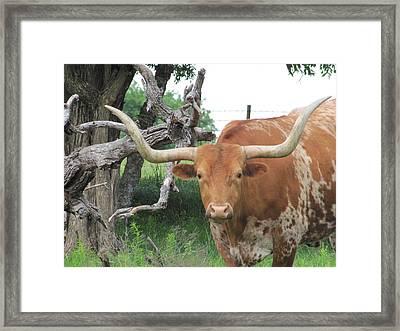 The Eyes Of Texas Framed Print