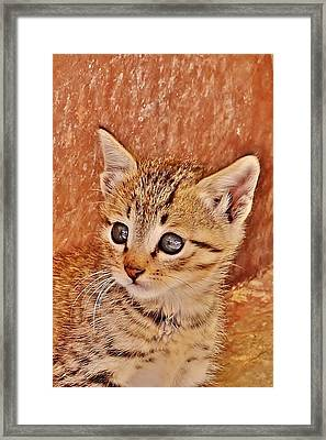 The Eyes Of The Cat Framed Print