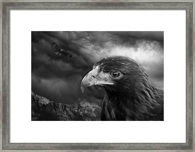 The Eyes Of The Hawk Framed Print