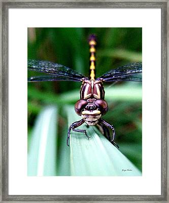 Framed Print featuring the photograph The Face Of A Dragonfly 01 by George Bostian