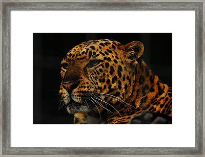 The Face Of A Leopard Framed Print by Valarie Davis