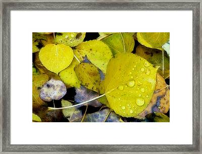 The Face Of Fall Framed Print