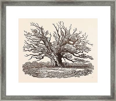 The Fairlop Oak, In Hainault Forest In The London Borough Framed Print by English School