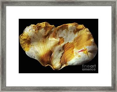 The Fallen Framed Print by Dan Holm
