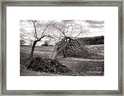 The Fallen Framed Print by Olivier Le Queinec
