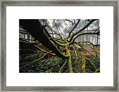 The Fallen Tree I Framed Print by Marco Oliveira