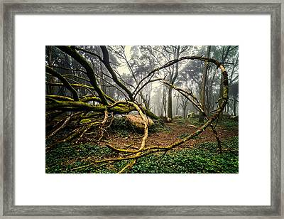 The Fallen Tree II Framed Print by Marco Oliveira