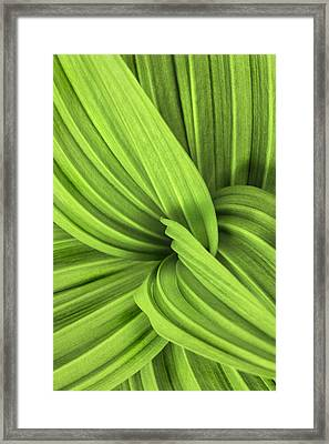 The False Hellebore-abstract Patterns In Nature Framed Print by Thomas Schoeller