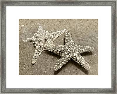 The Family Asteriidae Framed Print by Betsy Knapp