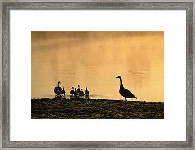 The Family Framed Print by Bill Cannon