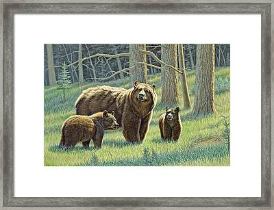 The Family - Black Bears Framed Print by Paul Krapf
