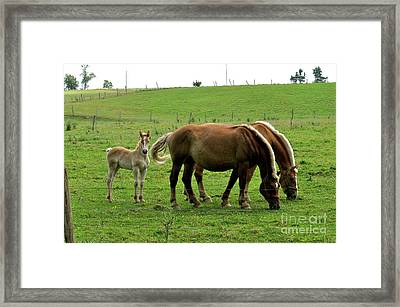 The Family Of Three. Framed Print by Penny Neimiller