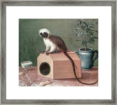 The Favourite Monkey Of Carl Linnaeus 1707-78 Oil On Canvas Framed Print