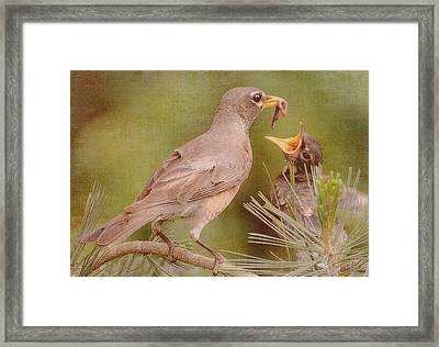 The Feeding Framed Print by Michelle Ayn Potter