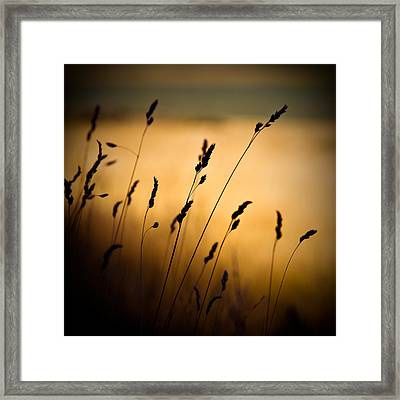 The Field Framed Print by Dave Bowman