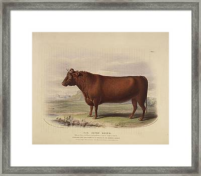 The Fifeshire Breed Framed Print by British Library