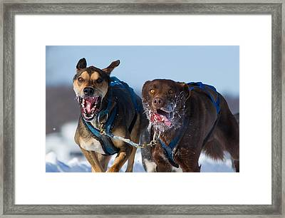 The Final Effort Framed Print by Mircea Costina Photography