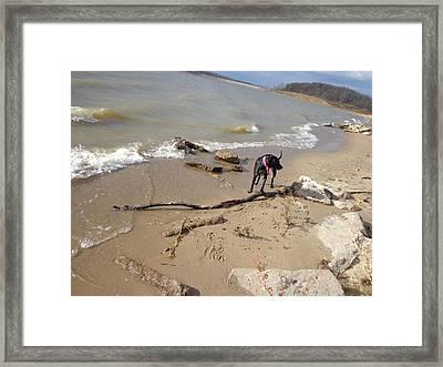 The Find Framed Print by Jacque Hudson