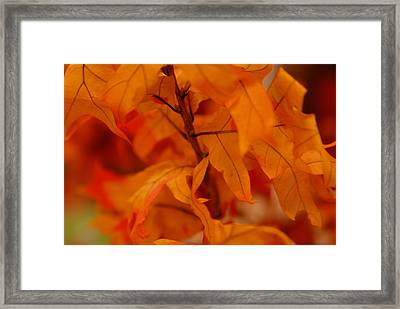 The Fire Within Framed Print by Michael Glenn