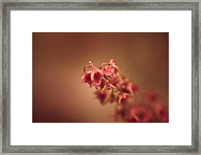 The Fire Within Framed Print by Shane Holsclaw