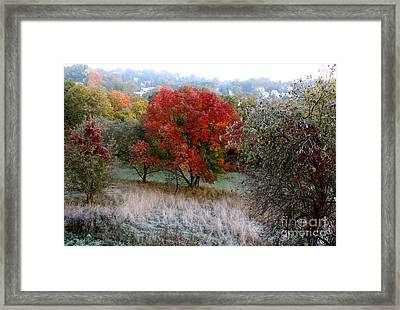 Framed Print featuring the photograph The First Frost by Jay Nodianos