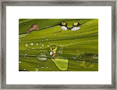 The First Rain Framed Print by Angela A Stanton