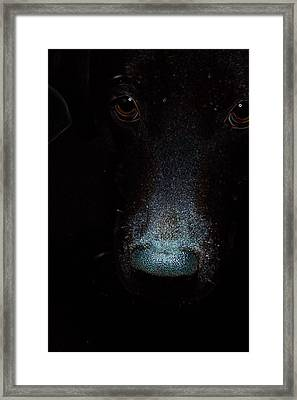 The First Thing I See In The Morning Framed Print by Christopher Hignite