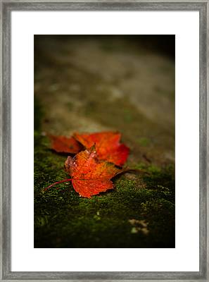 The First Whispers Of Fall Framed Print by Shane Holsclaw