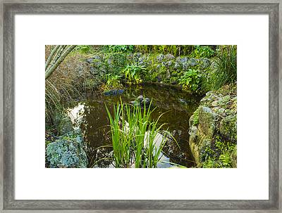 Framed Print featuring the photograph The Fish Pond  by Naomi Burgess