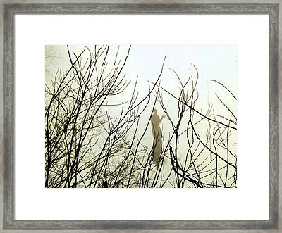 Framed Print featuring the photograph The Fisherman by Robyn King